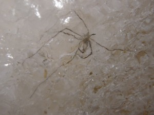 spider in the ice
